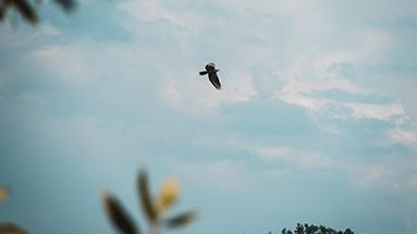 Take-to-the-skies-eagle-NCC_383x215px DU BIST EIN MEISTERWERK